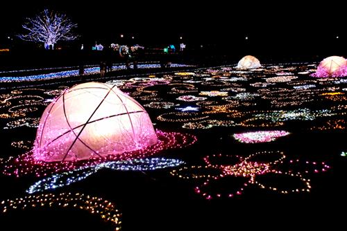 昭和記念公園のイルミネーション