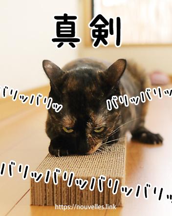 爪とぎに夢中な猫