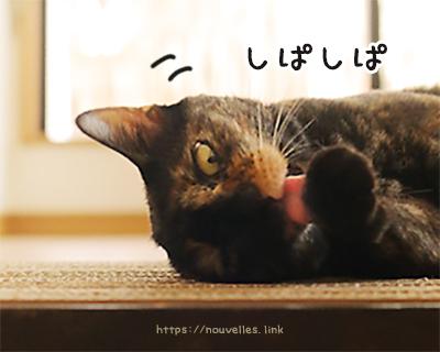 猫の爪とぎを手作り