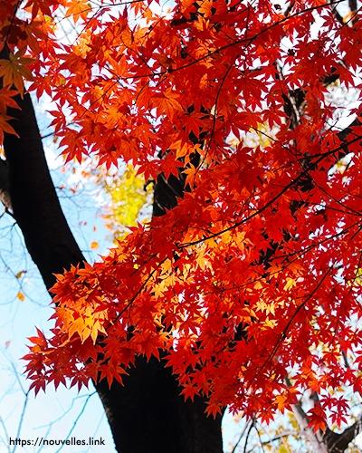 近所の公園の紅葉